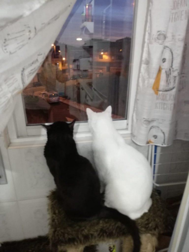 Gatito asomado a la ventana