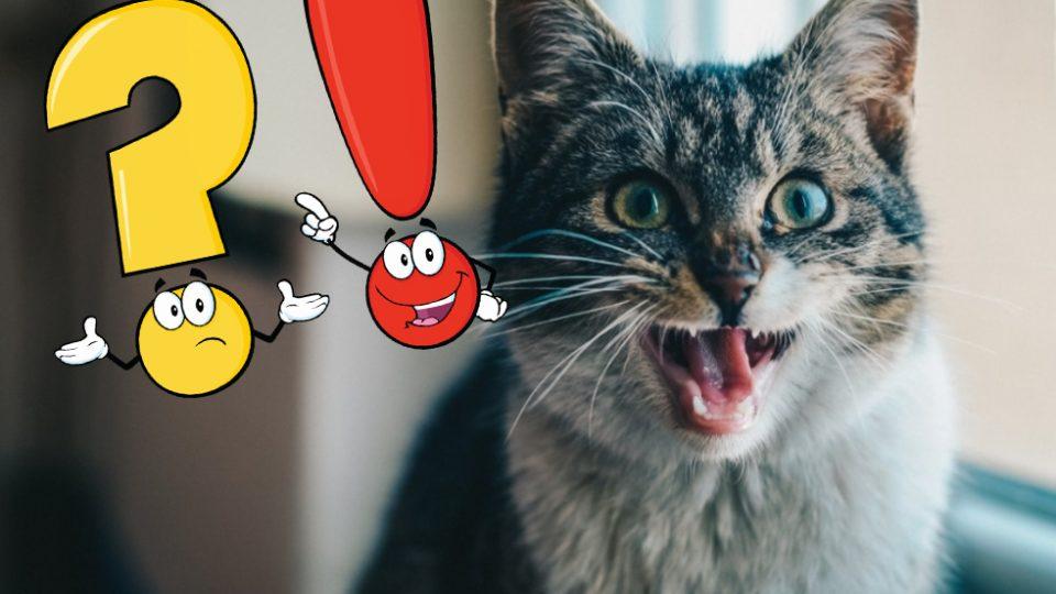 Mi gato abre la boca